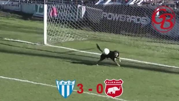 Gatuhund hjälte (!) i argentinsk fotbollsmatch