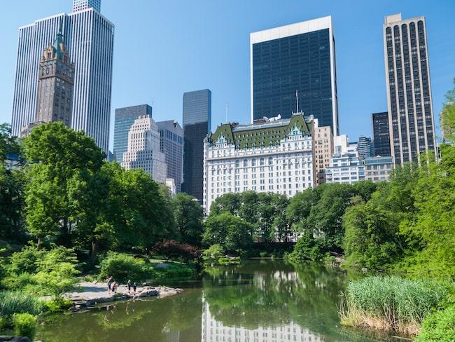 Hotellets närmsta grannar är bland andra Central Park, Apple-butiken på 5th Avenue och lyxiga varuhuset Bergdorf Goodman.