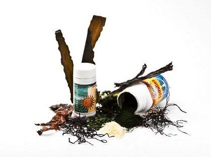 Delade meningar. Enligt en del experter ska man undvika de blågröna algsorterna som kan innehålla gift.