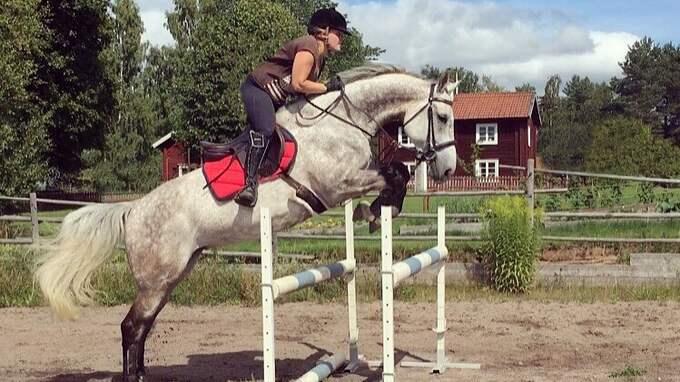 Jennifer Junkas hittade sin häst Zarissa knivskuren i hagen. Foto: Privat