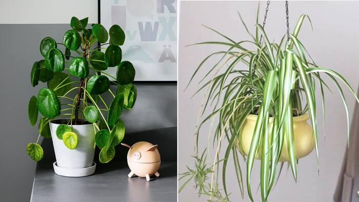 moderna gröna växter