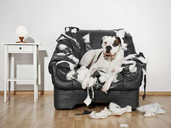 Att ha en hund kan vara alldeles underbart, men ibland kan de vara olydiga.