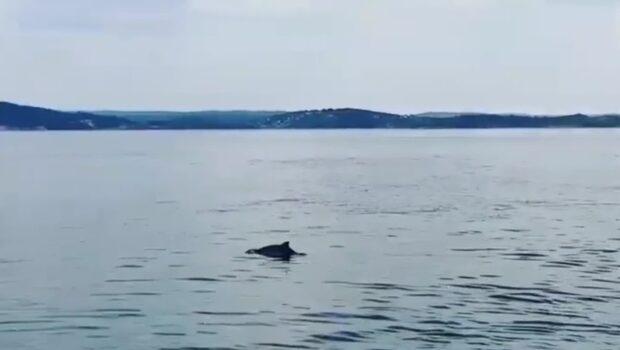 Familjen fångade tumlarna på film