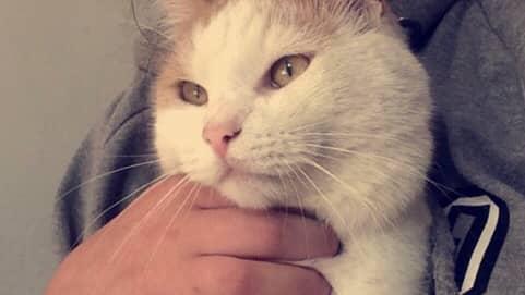 Emma Nilsson har återförenats med sin katt Bailey. Foto: Privat