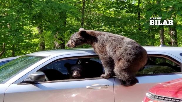 Storfrämmande i bilen