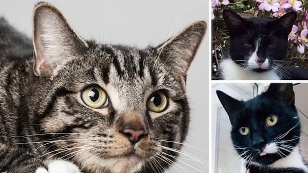 Kattmördaren sätter skräck i invånarna – har dödat 370 djur