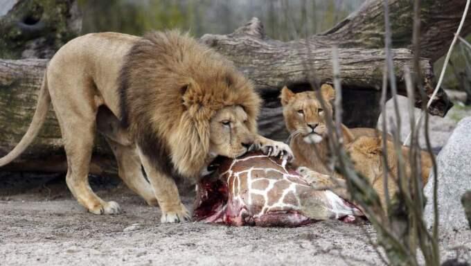 Zoo tidningen krok upp