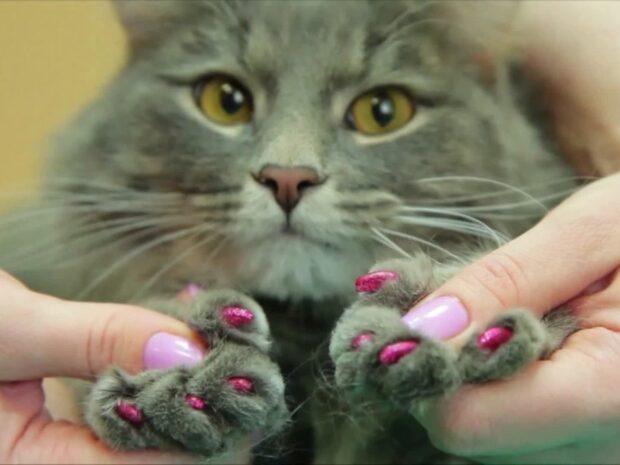 Bortskämda husdjur: Här kan katter och hundar göra samma sak som människor
