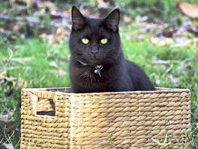 Och för att inte känna sig ensam tog han med sin katt Willow.