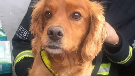 Hela världen hyllar de hjältemodiga hundarna efter branden i London. Foto: Twitter/London Fire Brigade