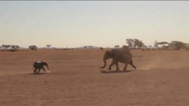 Glädjefnatt på savannen - elefanten hittar sin mamma