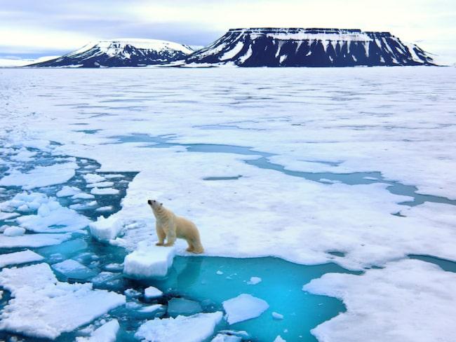 Svalbard som vi är vana att se det – täckt av is...