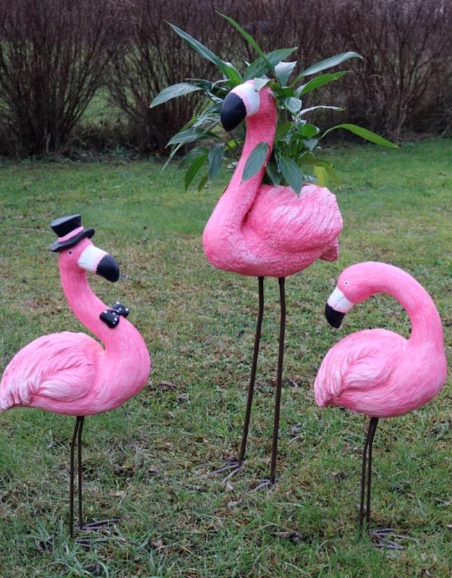 Det finns snart inte en enda trädgård som inte har flamingos i sig.