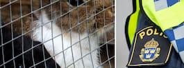 Familjens kaniner döda – misstänkts ha mördats