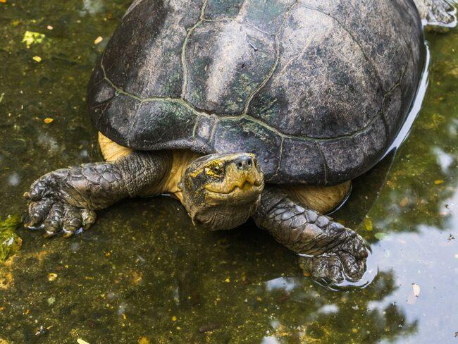 Anledningen? 40 sköldpaddor hade tagit sig upp på landningsbanorna.
