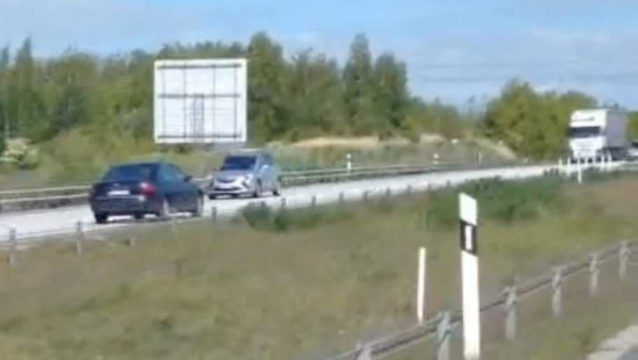 kort fnask svälja nära Malmö