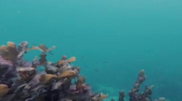 Östersjöns unika bräckta havsmiljö är på väg att försvinna