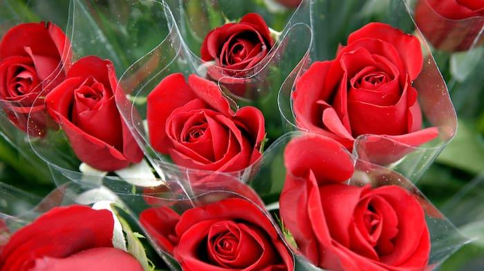 röda rosor betydelse antal