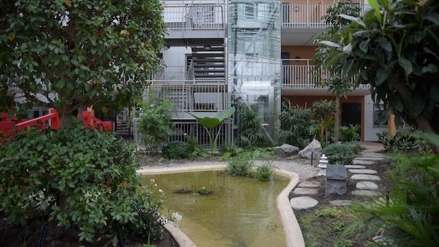 """Tropisk oas mitt i Vänersborg: """"Det är som att bo i paradiset"""""""