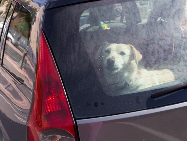 Hunden var inlåst i en bil utanför Mariebergs galleria i Örebro. (Bilden är från ett annat tillfälle.)