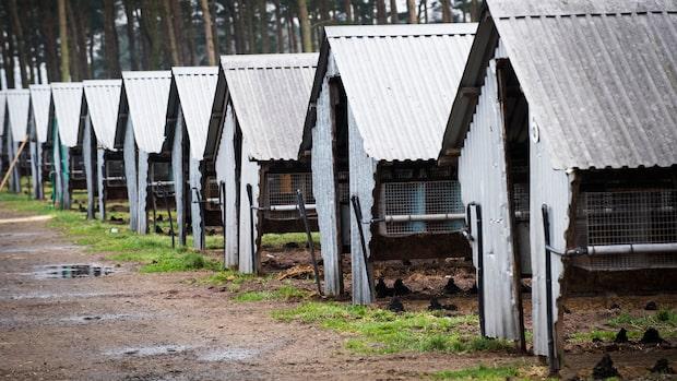 Coronaviruset har muterat i Danmark