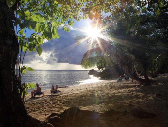 <span>Kvällssolen strålar genom djup grönska på en strand på Praslin.</span>